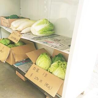 🌟 掛川産の美味しいお野菜