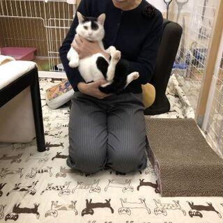 奄美の猫を救いたい❗白黒男子♪ホノホシ君