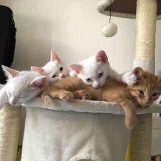 もうすぐ5か月の子猫4匹と親1歳2か月の里親さん募集中
