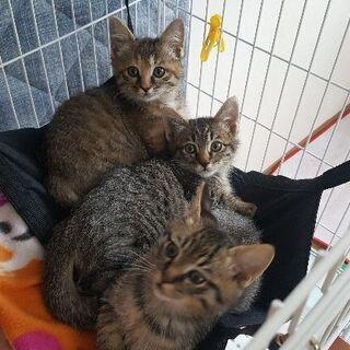 お陰様で、兄妹2匹一緒に里親さんが決まりました! - 猫