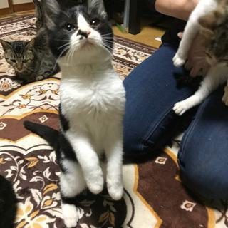 多頭崩壊寸前‼️子猫たちを助けて下さい‼️