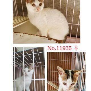 生後3ヶ月位の子猫の兄妹6匹が箱に入れ捨てられていました!