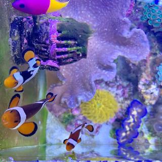 海水魚 アクアリウム 生態 サンゴ  水槽 一式