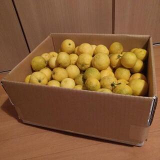 先着1名!採れたて 無農薬 花柚子 約8キロ
