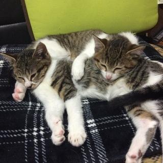 2 匹の子猫里親募集 - 猫