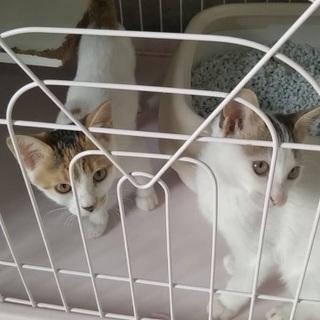 🆘保健所収容❗️生後3ヶ月位スリゴロの子猫3匹が助けを待っ…