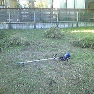家庭の庭 空き地の草刈いたします