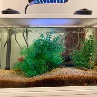 45センチ水槽 生態セット