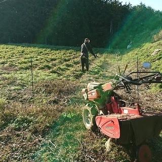 草刈、剪定などの造園作業致します!の画像