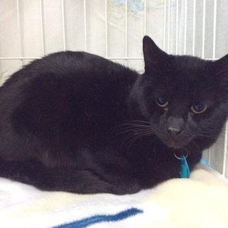 幸せを呼ぶ黒猫、トトくん。性格の良い子です