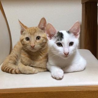 愛知県動物管理センター引き出し兄弟