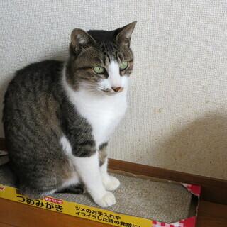 成猫ですが、とても人なつこいです ^-^