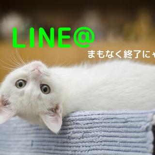 LINE@まもなく終了!公式アカウントへの移行サポート行います(...