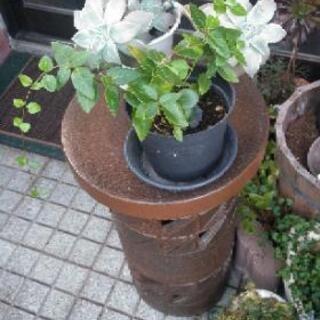 信楽焼の花台