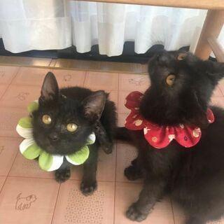 とても愛らしい黒猫のきょうだい