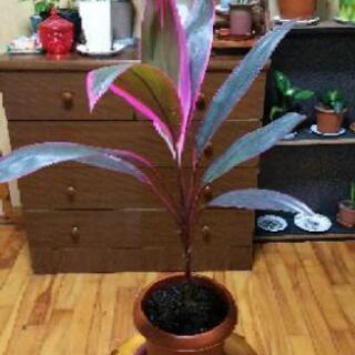 観葉植物K―15