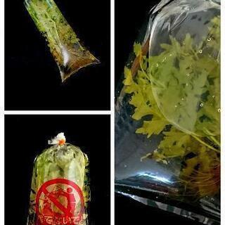 【郵送OK】鑑賞魚用ポリ袋 3サイズ 輸送用 熱帯魚 袋 輸送袋...