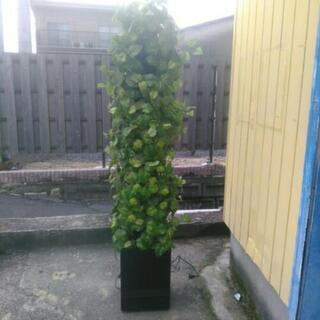 中古 観葉植物 除臭機 インテリア 店舗