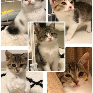 2カ月子猫5匹 会って決めて下さい
