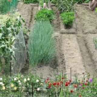 呉市仁方で家庭菜園探してます。