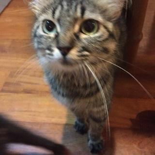 トライアル中☆お母さん猫の里親さん募集中〜メス・1歳〜