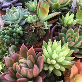 花畑〜多肉植物やお花の寄せ植え可愛いですよ〜