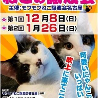 1/26(日) 猫の譲渡会 in 名古屋市昭和区吹上町 吹上公園南東