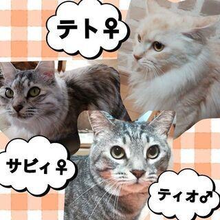 姉弟猫たちです!