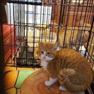 被災地で置き去りにされた子猫