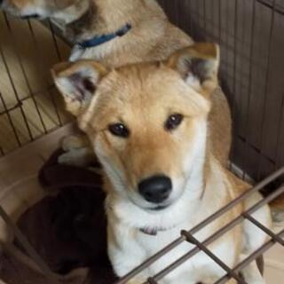 野良犬が産んだ生後約4ヶ月過ぎの子犬(呼名:ひな)メスの里親募集