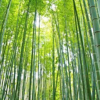 孟宗竹の地下茎買います