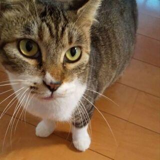 (急募)この猫の里親募集。