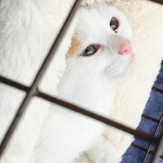 子猫・ピンクのお鼻の美人さんです♪