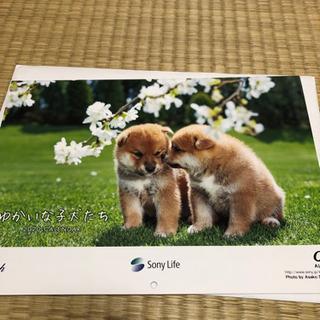 子犬カレンダー ソニーノベルティ