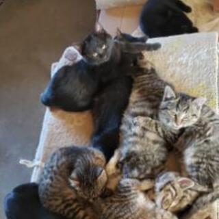 生後約4~5か月のキジ2匹黒2匹性別未確認