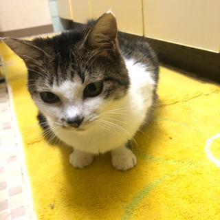 保護猫ミミ『トライアル決定』