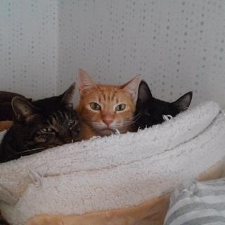 猫のボランティアさんを募集しています(=^・^=)。