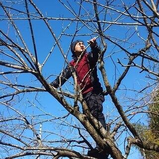 プロの庭師に学ぶ、梅林再生~生態系の総合デザイン(第三回)