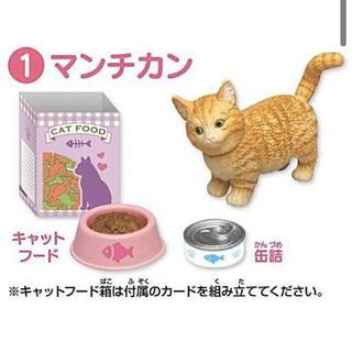 アニアフレンズ 猫 お譲り先を探しています。