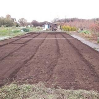 初心者も大歓迎!広めな区画の畑をお貸しします!(貸し畑/貸し農園...