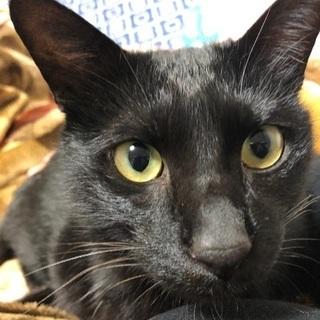 人懐っこい黒猫ちゃん!