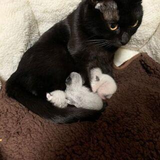 生まれたばかりの子猫3匹