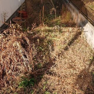草抜き·草刈り·剪定·伐採·伐根·落ち葉拾いお任せください。