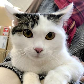 2月2日(日) 猫の譲渡会 名古屋市港区 港生涯学習センター み...