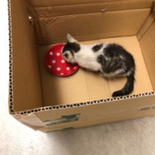 子猫 Seeking kitten's adaptation の画像