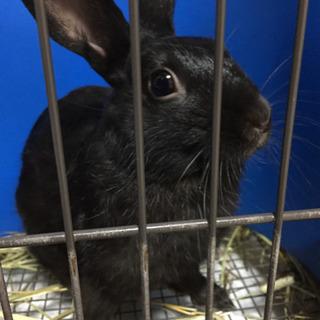 ミニウサギ(4歳)