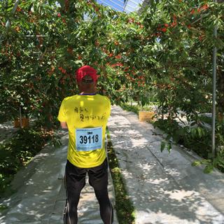 果樹園での仕事