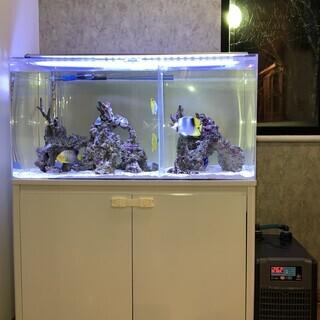 オーバーフロー水槽(900×450×450)など飼育環境フルセット