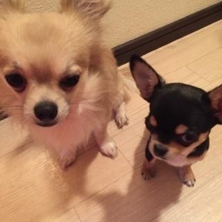 元気いっぱい仲良し2匹(^-^)