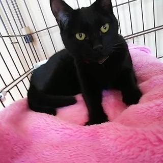 黒猫10匹!会って決めてください 。